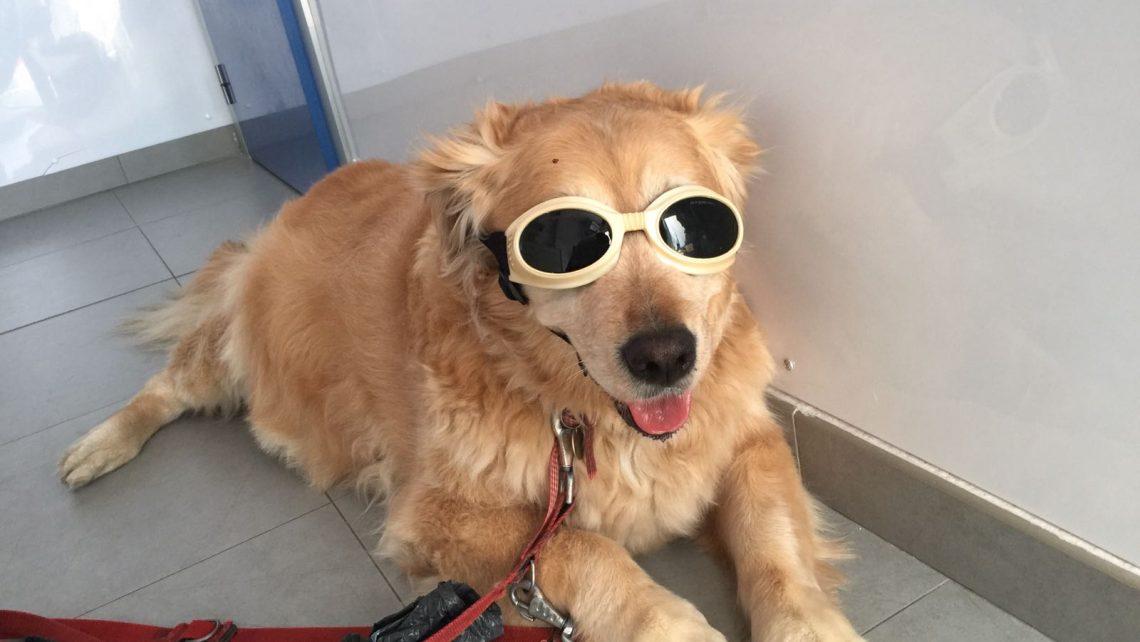 Terapia Laser para mascotas
